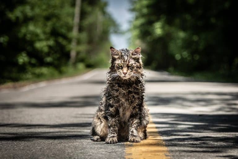 Pet Sematary a settembre in Blu Ray